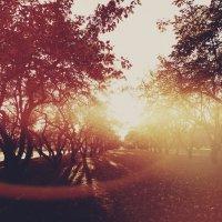 Sunshine :: Елена Викторовна