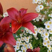 Flower :: Kristina Ersten