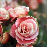 Цветы :: Владимир Бардин