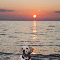 Любуясь закатом на Байкале... :: Анна Вакина