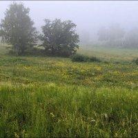 Туман на лугу :: Любовь Потеряхина