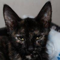 демонический кот :: Евгений Желтяков