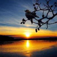 Провожая Солнце :: Альберт Беляев