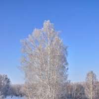 Во поле березонька... :: Николай Мальцев