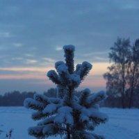 Зимний закат :: Любовь Шихова