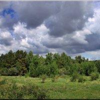 Плывут по небу облака :: Ирина Таболина