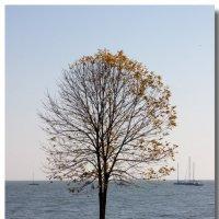 В душе это дерево - яхта!:)) :: Андрей Lyz