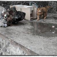 Целенаправленная Антифотографическая Агрессия Уличного Кота :: Андрей Пашис