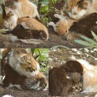 Котята только появились на свет :: Анжелика Судникова