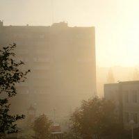 Утро :: petr haritonov