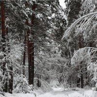 Зимний лес :: Дарья Верхоломова