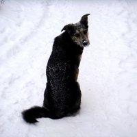 Холодно,однако! :: Елизавета Успенская