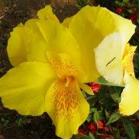 Цветы :: Геннадий Подгола