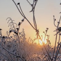 Зимний рассвет. :: татьяна соловьёва