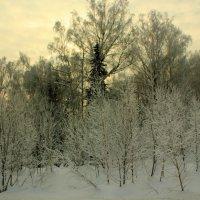 зима :: Сергей Бурнышев