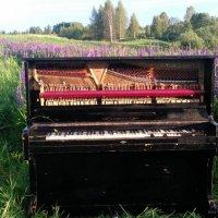 пианино в поле :: Денис Вознесенский