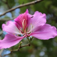 Цветок :: Лариса Акбашева