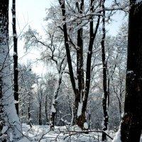 Зимний день. :: Николай Сидаш
