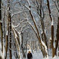 Зимнее утро. :: Николай Сидаш