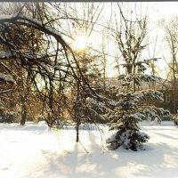 Сибирская зима :: Юлия Деева