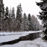 Графика зимы :: Елена Боржковская