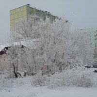 Оренбургская зима 2012 года :: Светлана Кимовна Дробышева