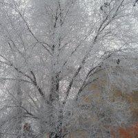Оренбургская зима в марте 2012 года :: Светлана Кимовна Дробышева