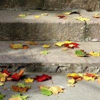 Краски осень :: Наталия Зыбайло