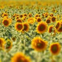 солнечный проспект ... (выше голову и все будет хорошо) :: Maxxx©