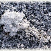 Зимний цветок :: Сергей Беляев