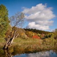 Осенние краски :: Анна Чапала
