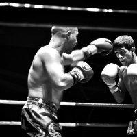 knockout :: Анна Чапала
