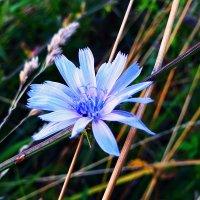 лесной цветок :: Роман Кравчук