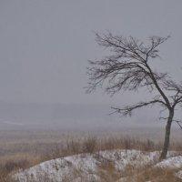 Погода... :: Алексей Иванов