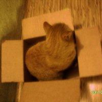 Вот такой любимый кот :: Ольга Т
