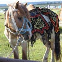 Якутская лошадь :: Василий Николаев