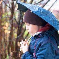 Дождливая осень :: Наталья Петрова