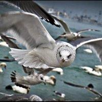 Портрет чайки :: Юрий Ходзицкий