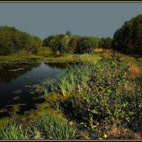 Тихий пруд :: Диана Буглак