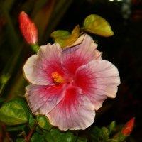 Цветок ночью :: Лариса Акбашева