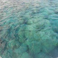 Кораллы :: Оля Белых