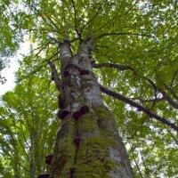 Грибное дерево :: Юрий Кальченко
