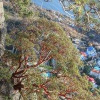и на камнях растут деревья :: Николай Ковтун
