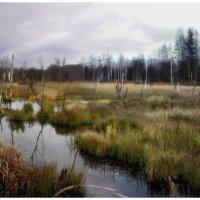 Тут озеро было, теперь его нет... :: Валентин Жигалин
