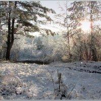 первый снег :: Татьяна Панчешная