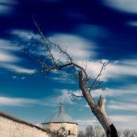 Одинокое дерево :: Владимир Ноздрачев