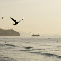 Черный ворон над морем :: Sofia Rakitskaia