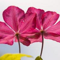 Цветы :: Vovograff V