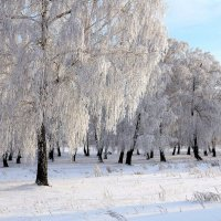 Мороз :: Владимир Зыбин