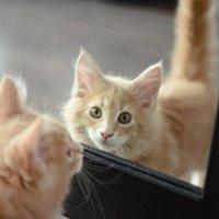 кошачьи отражения :: Sofia Rakitskaia